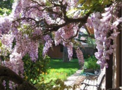 Wisteria Ways House Concerts